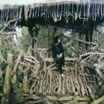 Goa Pinus, Wisata Malang yang Ngehits dan Instagramable