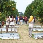 Wisata Agro Petik Jeruk di Batu Malang