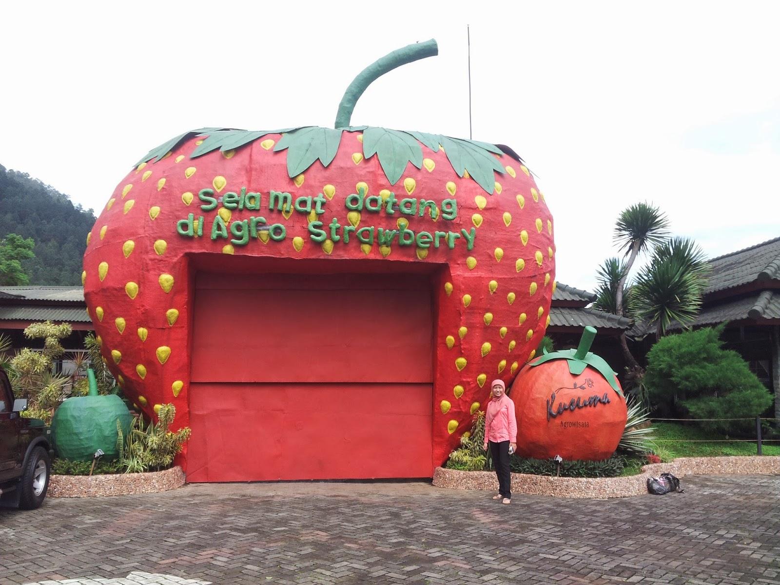 Agro Strawberry