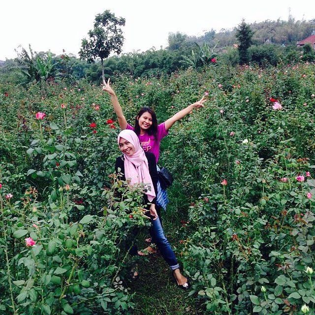 Bunga di Desa Sidomulyo