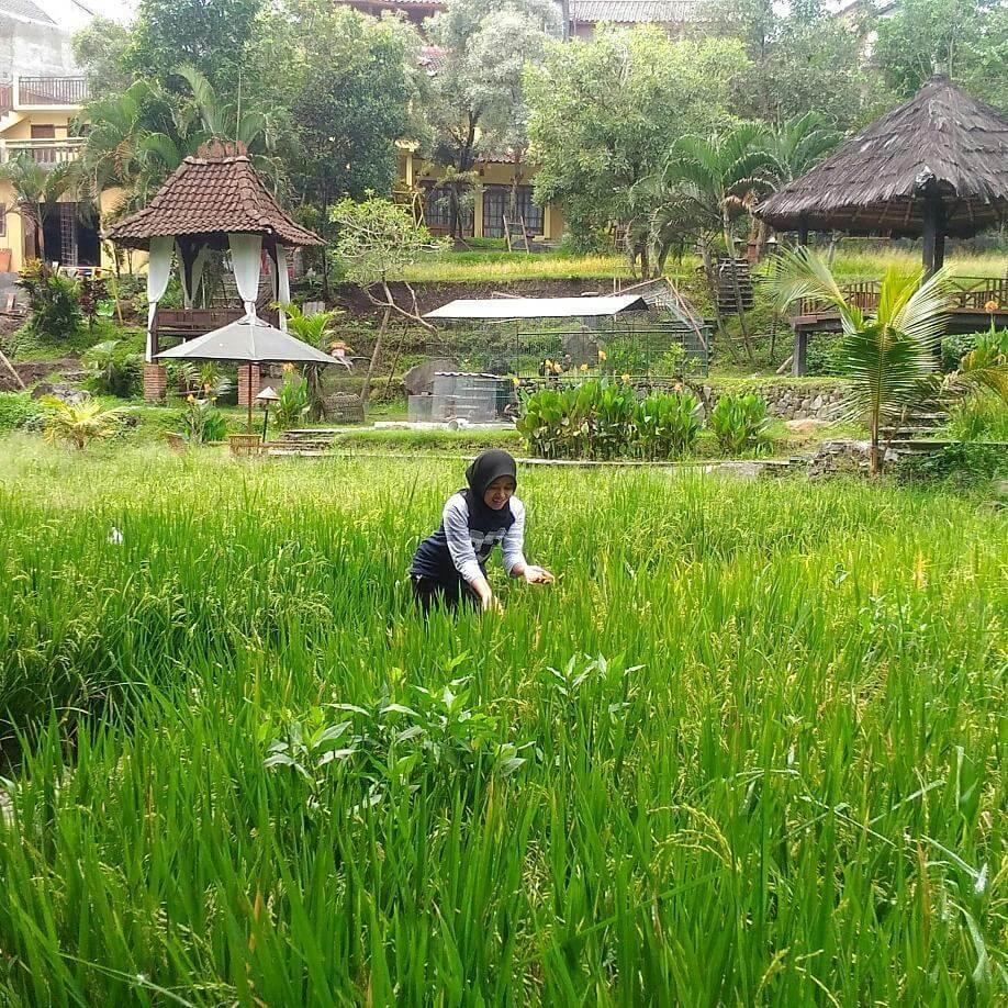 Padi Heritage Malang