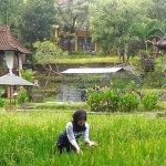 Tempat Menginap Bertema Alam di Malang, Sejuk Sepanjang Hari