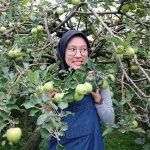 Wisata Agro di Malang, Serunya dari Petik Apel hingga Petik Madu