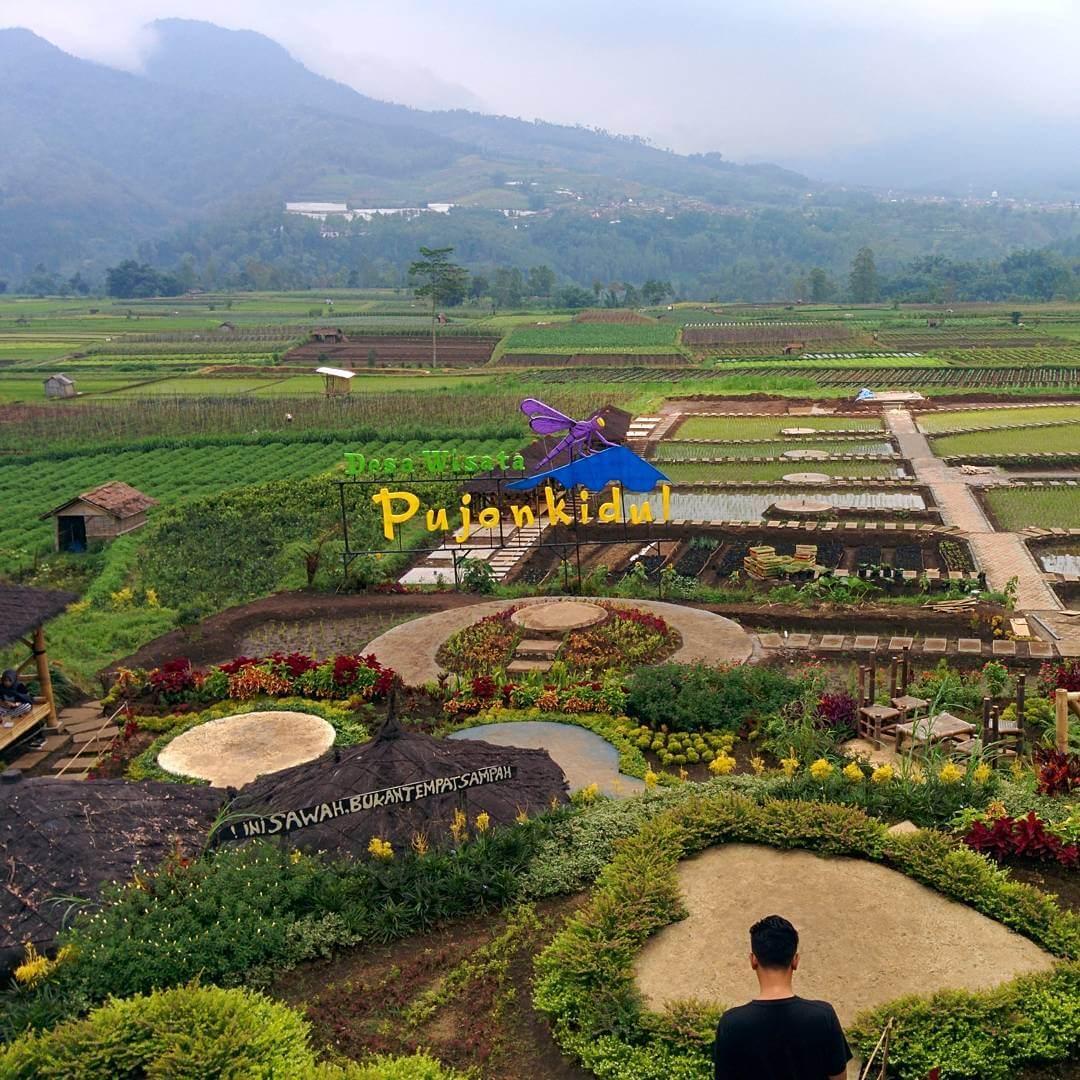 Cafe Sawah Pujon Kidul Cafe Outdoor Kekinian Di Malang Ongis Travel