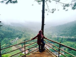 Goa Pinus