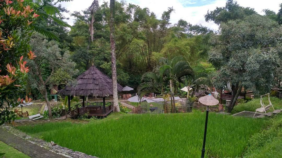 Paddy Heritage Malang