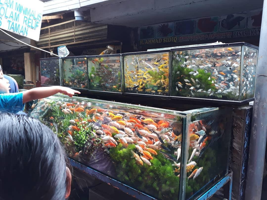 Pasar Burung Splendid, Malang