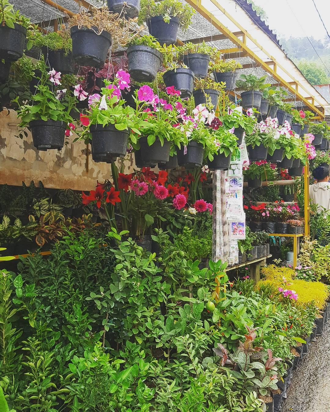 Wisata Belanja Murah Di Malang, Ini Daftarnya • Ongis Travel