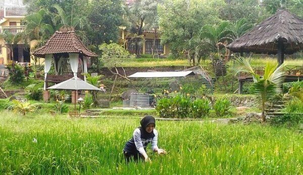 Tempat Menginap Bertema Alam di Malang