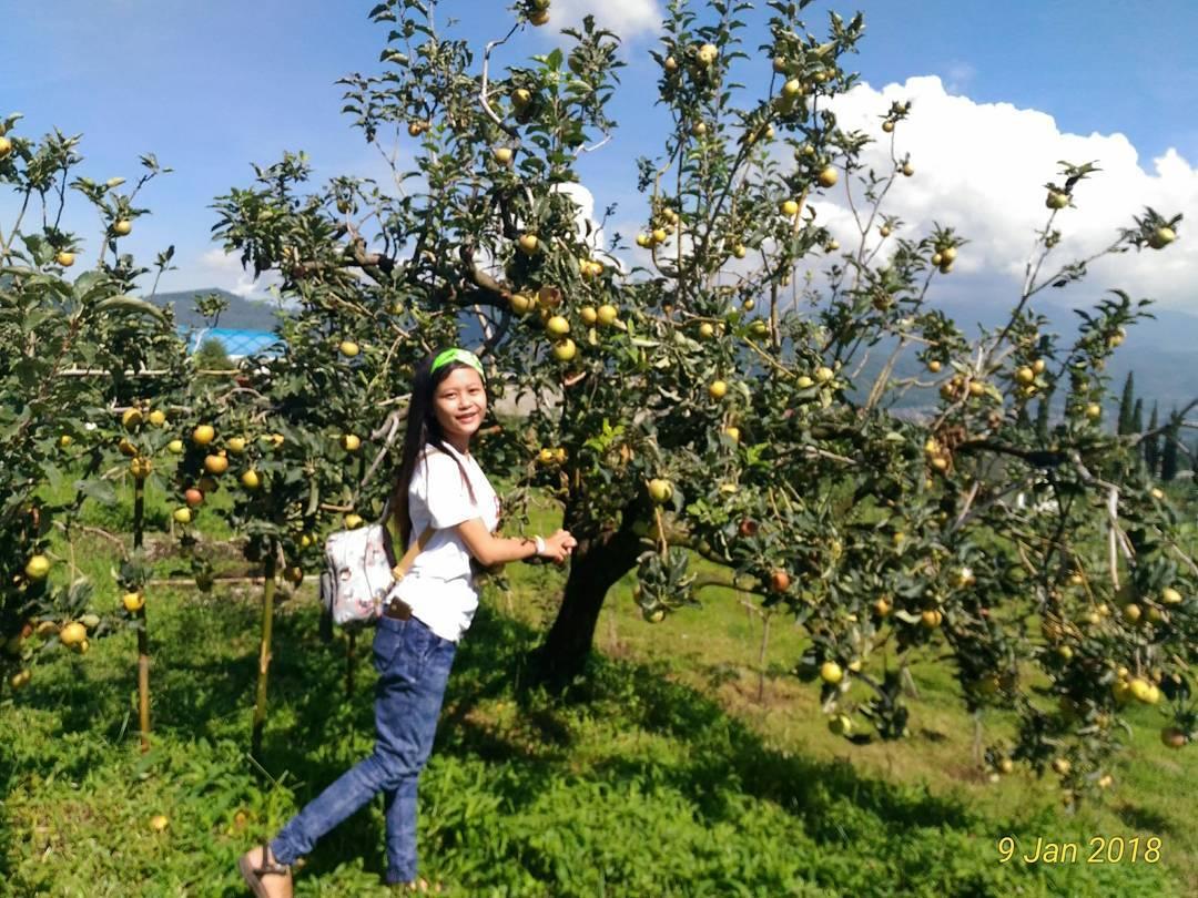 Wisata Petik Apel Selecta, Batu