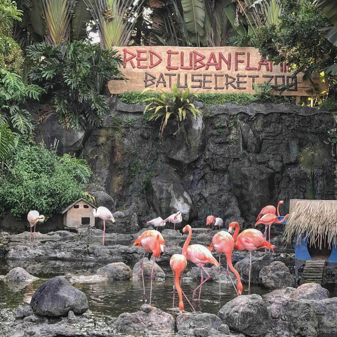 Falmingo di Batu Secret Zoo