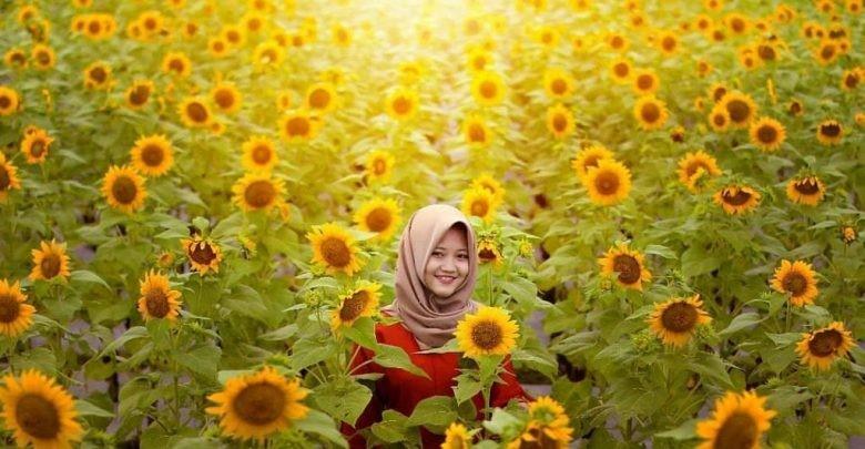 wisata kediri kebun bunga matahari