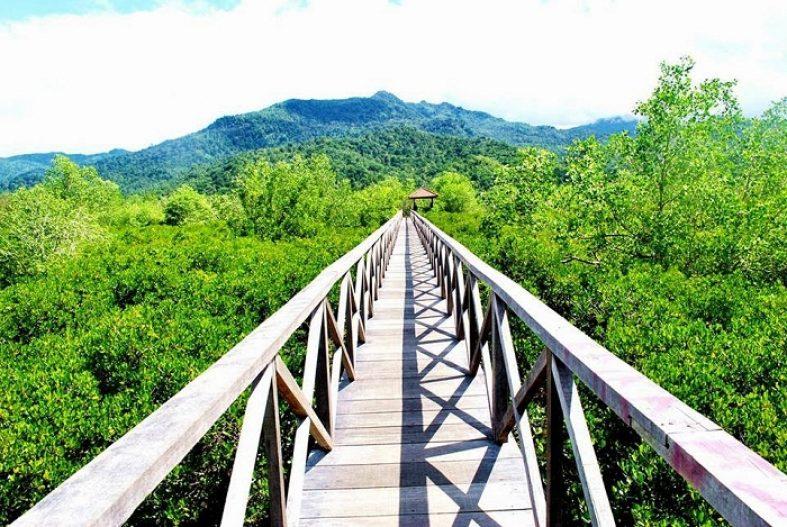 hutan mangrove cengkrong travel malang trenggalek