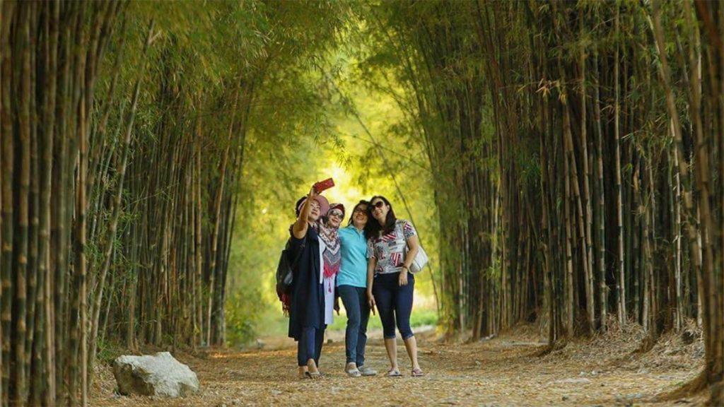 hutan bambu surabaya untuk rental mobil surabaya