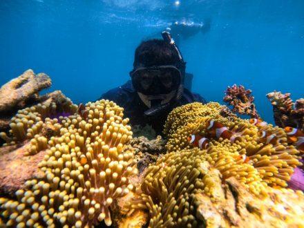 diving paket wisata karimunjawa terbaru
