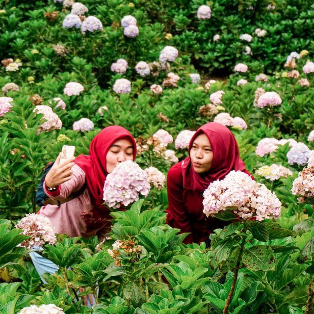 Udah pernah ke Selecta Flower Garden belum? Disini kita bisa lihat ratusan bunga yang indah dan menawan. Ada juga spot-spot yang instagramable loh..  Mau kesana? Langsung join @ongistravel aja!  Informasi lebih lanjut hubungi : 📷 Instagram: @ongistravel 📞 082 21 8888 236 | 082 21 8888 239 (Whatsapp, Call, SMS) ☎️ Call Center (0341) 496 753  📩 ongistravel@gmail.com 🌎 www.ongistravel.com . #ongistravel  #paketwisatabromo #paketwisatamalang #tripmalang  #bromo #tripbromo #fotobromo #folkgreen #dagelan #sunrisebromo #folkindonesia  #ayodolan  #livefolkindonesia #bromomurah #exploreindonesia #bromotrip #explorebromo #amazingmalang  #opentripbromo #exploremalang #exploregunung  #indonesia_photography #tripbromomurah #wisatamalang #bromomidnight #bromo #yoikimalang #YOURTRIPLIFESTYLE